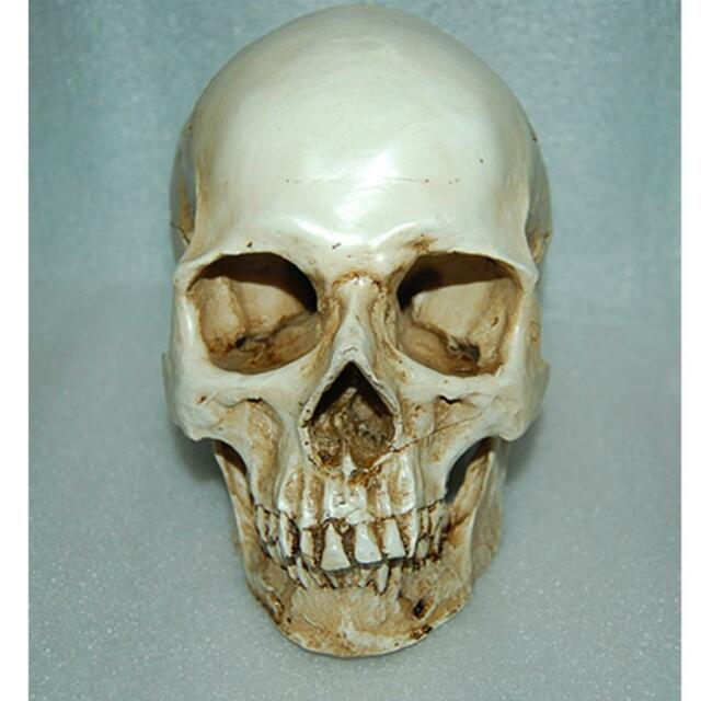 1:1 Scale Human Head Skull Replica Resin Anatomical  Skeleton Models