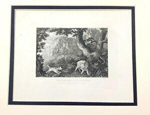 1843 Caccia Stampa Wild Cinghiale Semina Tedesco Foresta Originale Antico Inciso
