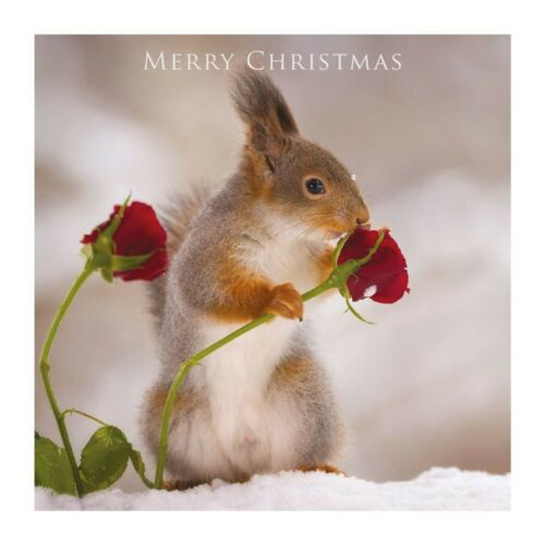 Romantic Photographic Xmas Card Squirrel with Rose Christmas Greeting Card
