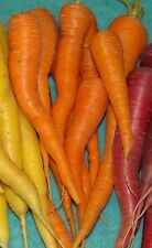 Carrot Seeds- St. Valery- Rare Heirloom- 300+ '16 seeds     $1.69 Max. Shipping