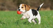PUPPY TRAINING CD, NATURAL SOUNDS TO CALM & HELP WITH WALKING, DOG BEHAVIOUR