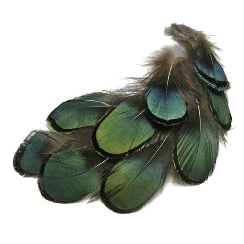 New 50X in Set Green LADY AMHERST PHEASANT Feathers Haus Festival  NEU^