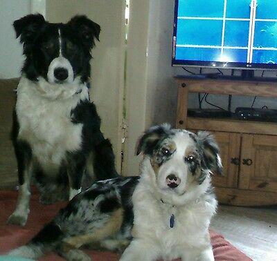 Erfinderisch Natürliche Kräutermix - Wurmkur - Für Den Hund ; Aus Tierheilpraxis