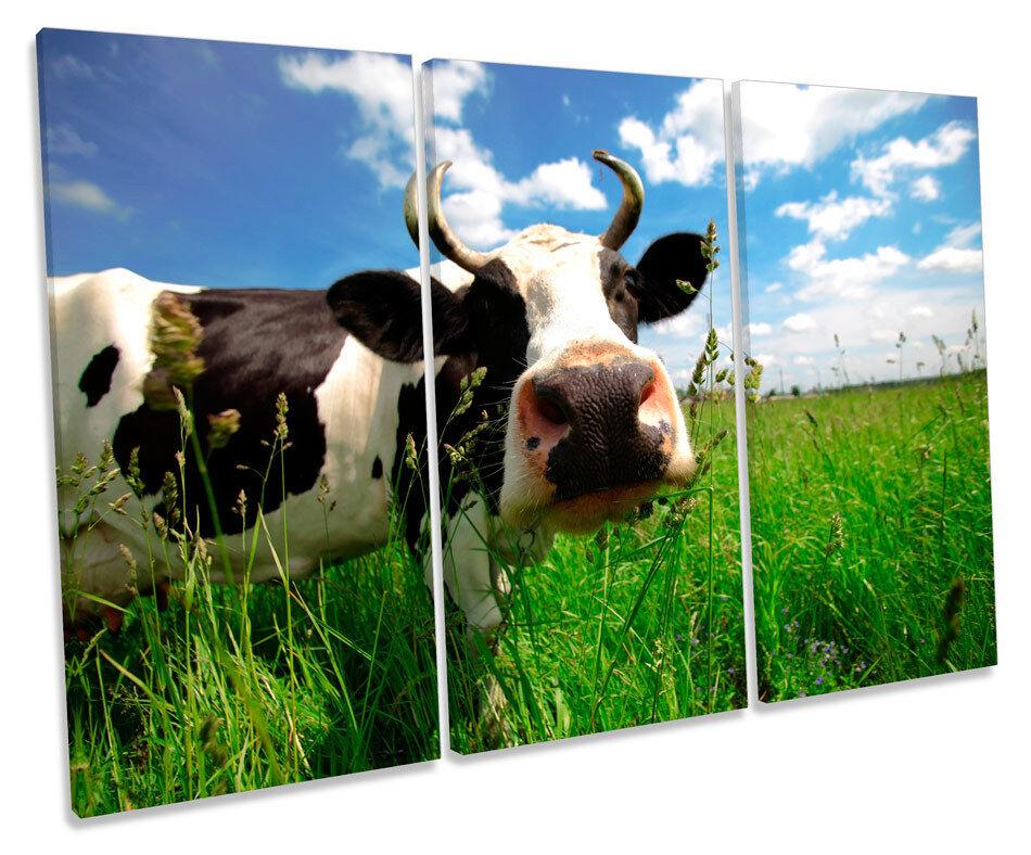 Cow Face Funky TREBLE CANVAS Wand Kunst Box Framed Drucken