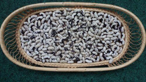 Seeds Bush beans Dalmatian 10