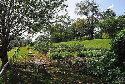 25 LOT Heirloom non-GMO Survival Garden Emergency Vegetable Seed Packs Organic