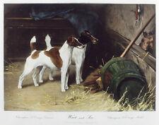 SMOOTH FOX TERRIER SFT DOG ART PRINT ENGRAVING ARTHUR WARDLE - Frances Redmond