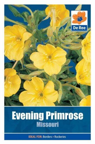 De Ree Seeds Collection Flower Evening Primrose Missouri