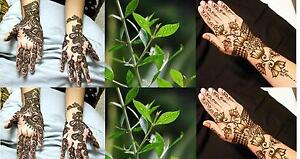 Henna Plant 50 Seeds Lawsonia Inermis Tattoo Hair Dye Plant