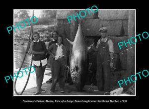 OLD-LARGE-HISTORIC-PHOTO-NORTHEAST-HARBOR-MAINE-THE-TUNA-AT-THE-WHARF-c1950