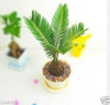 15 seeds of Miniature cycas bonsai tree plant mini home grow flower palm sago