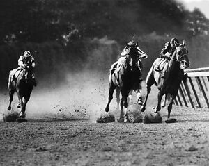 1941-Triple-Crown-Champion-WHIRLAWAY-Glossy-8x10-Photo-Belmont-Park-Print-Poster