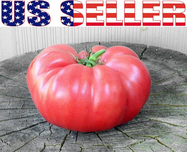 HEIRLOOM NON GMO NON HYBRID OPEN POLLINATED GARDEN VEGETABLE SEEDS SHIPS FREE!