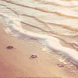 45cfa9d33 Paw Prints by Carolyn Cochrane Art Print Puppy Dog Sand Ocean Beach ...
