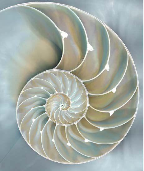 Caroline Kelly  Nautilus in Blau II Fertig-Bild 50x60 Wandbild Muscheln maritim