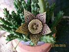 CACTUS succulents, cactus ,cacti, plant