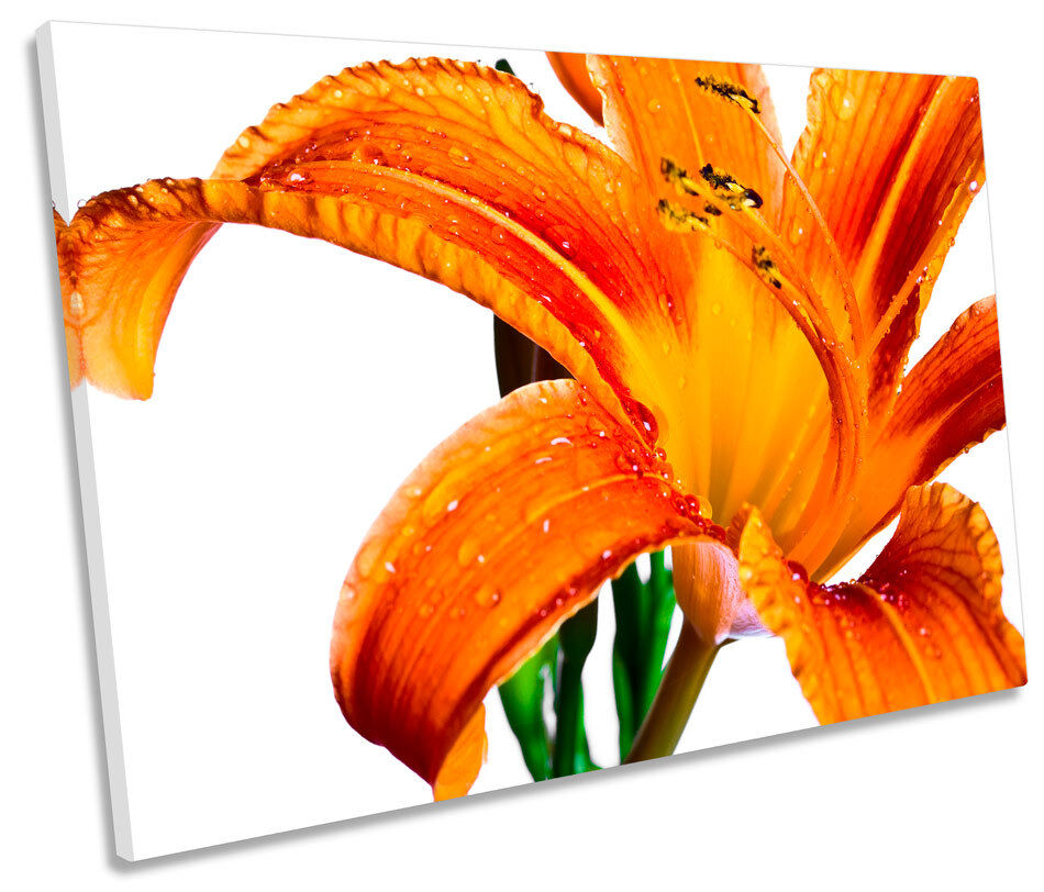 Orange Tiger Lily Floral Flower SINGLE CANVAS WALL ART Picture Print