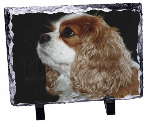 Blenheim King Charles Spaniel Photo Slate Christmas Gift Ornament AD-SKC1SL