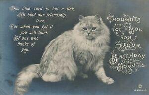 Anniversaire-Chat des pensées vous sur votre Anniversaire matin Real Photo Postcard RPPC
