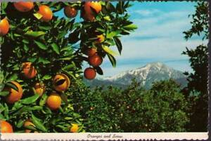 wsc-Postcard-Oranges-and-Snow