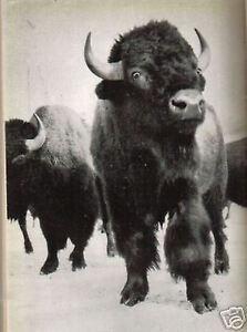 STORIA-NATURALE-ZOOLOGIA-CURIOSITA-039-DEL-MONDO-ANIMALE-LANE-PIACEVOLE-EDIZIONE