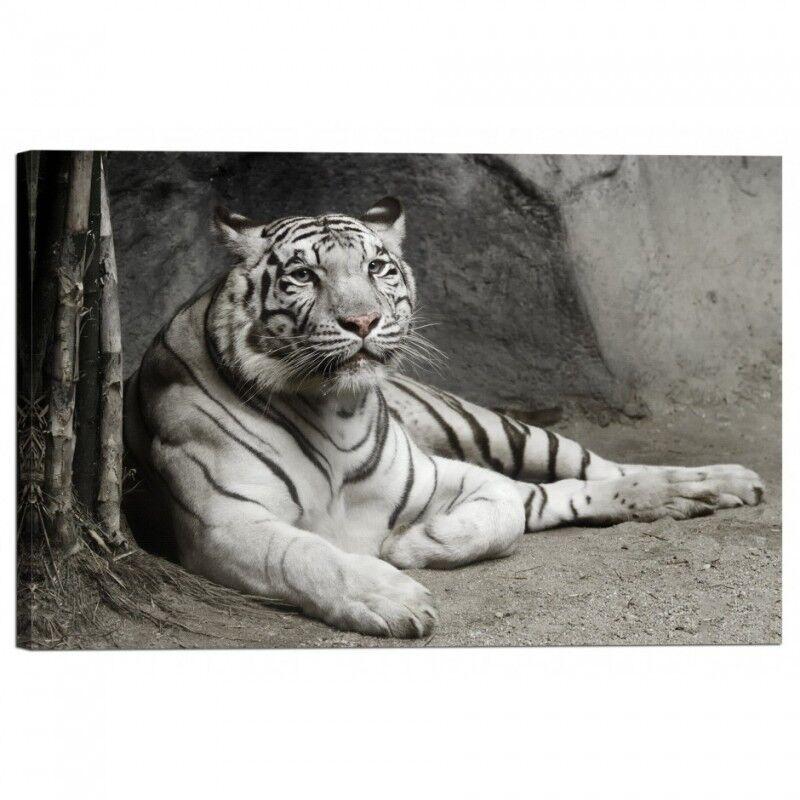 Quadro Stampa su Tela con Telaio Tigre Tigre Tigre Bianca a95845