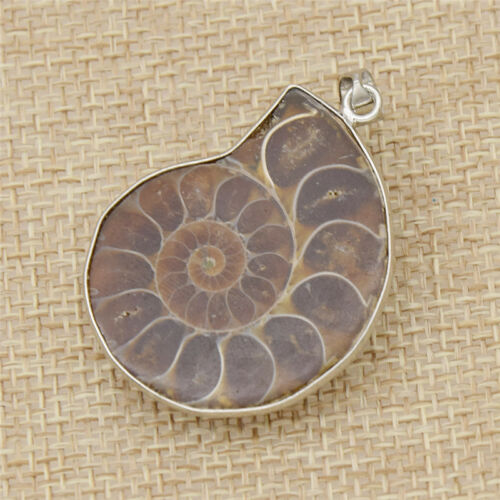 Charm Natural Ammonite Shell Fossil Pendant DIY Jewelry Necklace Craft Gift 1pc