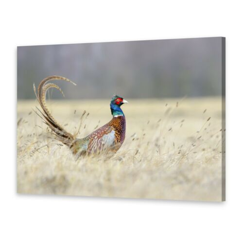 Leinwand-Bilder Wandbild Druck auf Canvas Kunstdruck Fasan