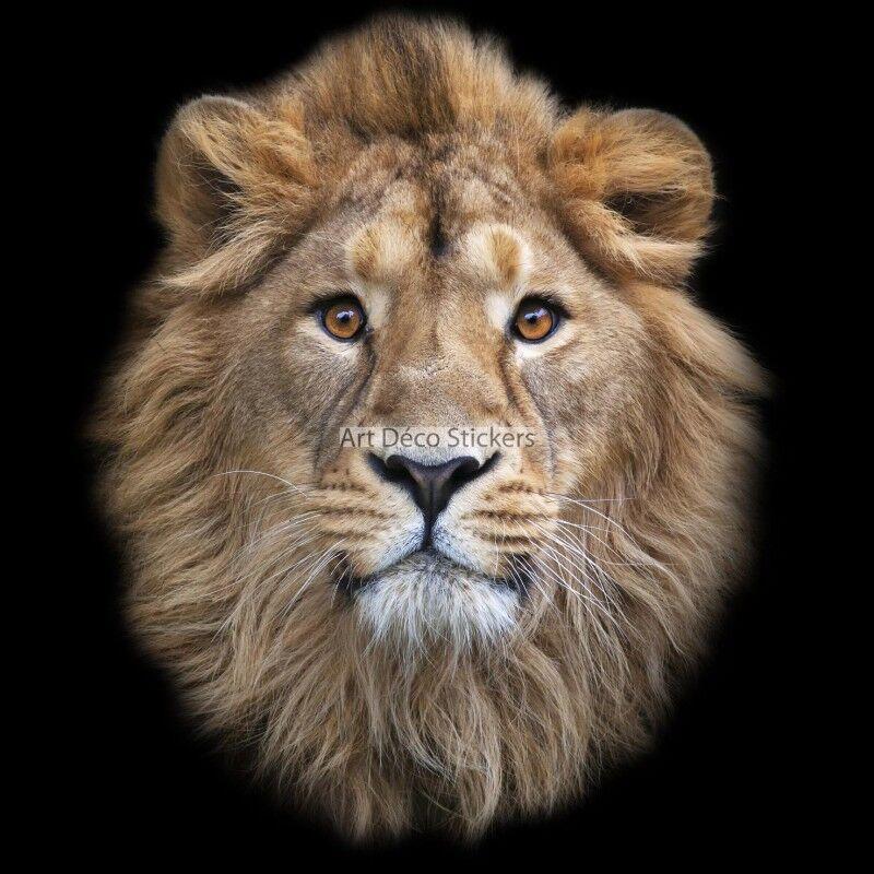Stickers muraux déco déco déco Lion réf 11070 11070 113e2f