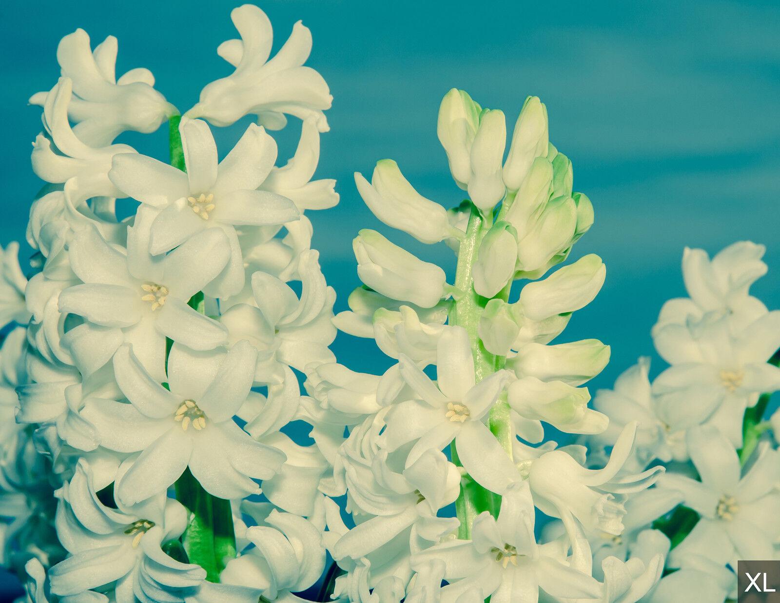 Papier peint toile rapprocheHommes t sur les fleurs-papiers fleurs-papiers les peints   pour chambre fdb208 d9c51a