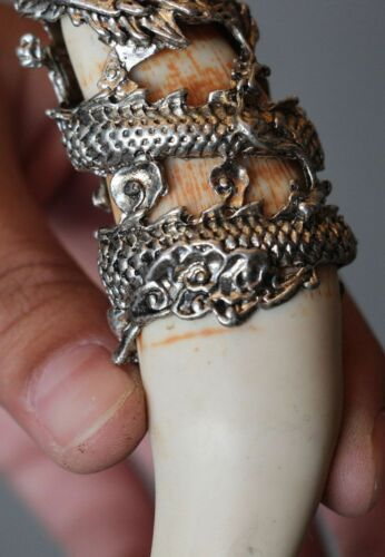 Details about  /Chinese Antique Boars Tooth Wild Hog Silver Dragon protective talisman Pendant