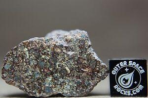 NWA-10836-LL3-Primitive-Chondrite-Meteorite-7-8-gram-windowed-fragment
