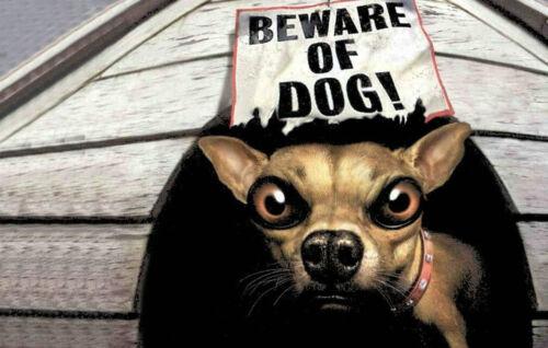 Остерегайтесь собака фото печать смешные животные опасности предупреждение щенок арт A4 плакат