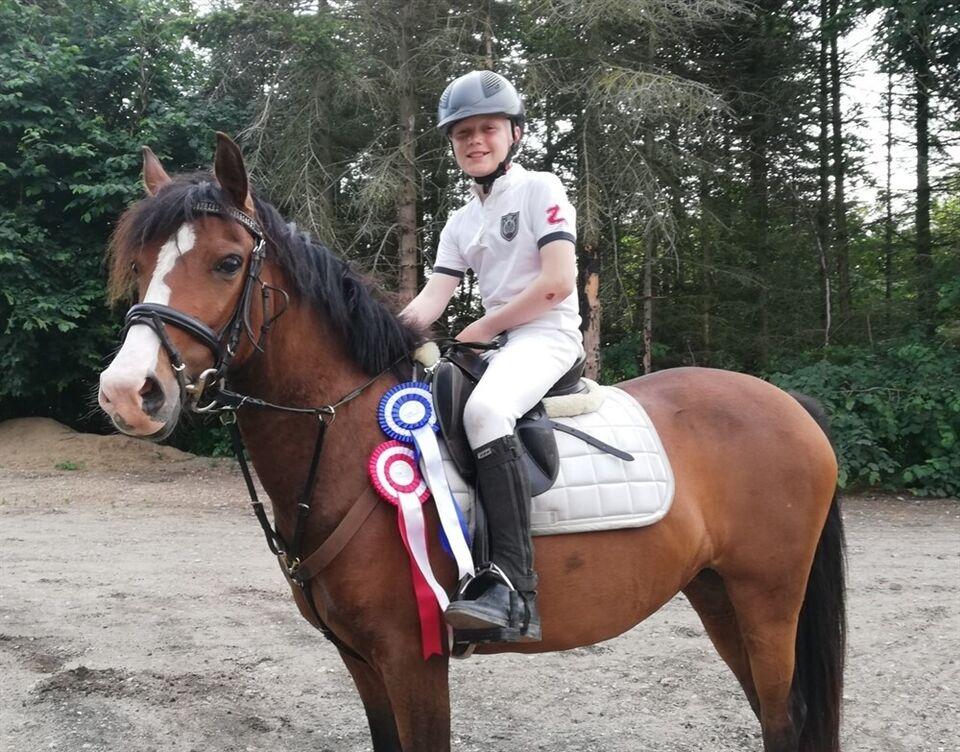 Hollandsk Sportspony (NRPS), hoppe, 10 år