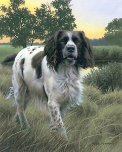 Nigel-Hemming-SPRING-WATCH-Springer-Spaniels-Gun-Dogs-Art-Fieldsports-Shooting