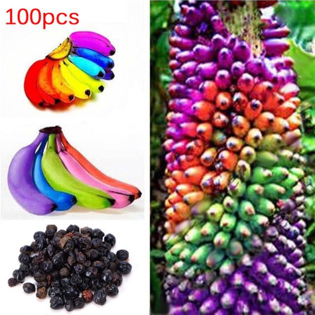 100pcs Rainbow Banana Seeds Delicious Bonsai Fruit Plants Home Garden Decor  KK