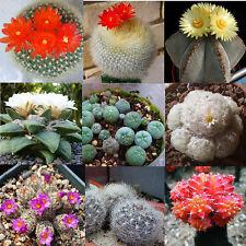 10Pcs Rare Succulent Cactus Seeds Prickly Pear Organic Plants Seeds Mix Garden