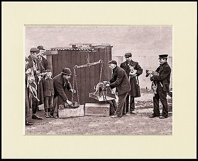 WHIPPET RACING THE WEIGHING IN PERIOD IMAGE ON DOG PRINT MOUNTED READY TO FRAME
