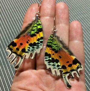Post Earrings Colorful Moth Earrings Sunset Moth Butterfly Earrings