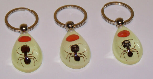GLOW IN THE DARK KEYRING -  BIG HEADED REAL ANT - GOOD LUCK CHARM
