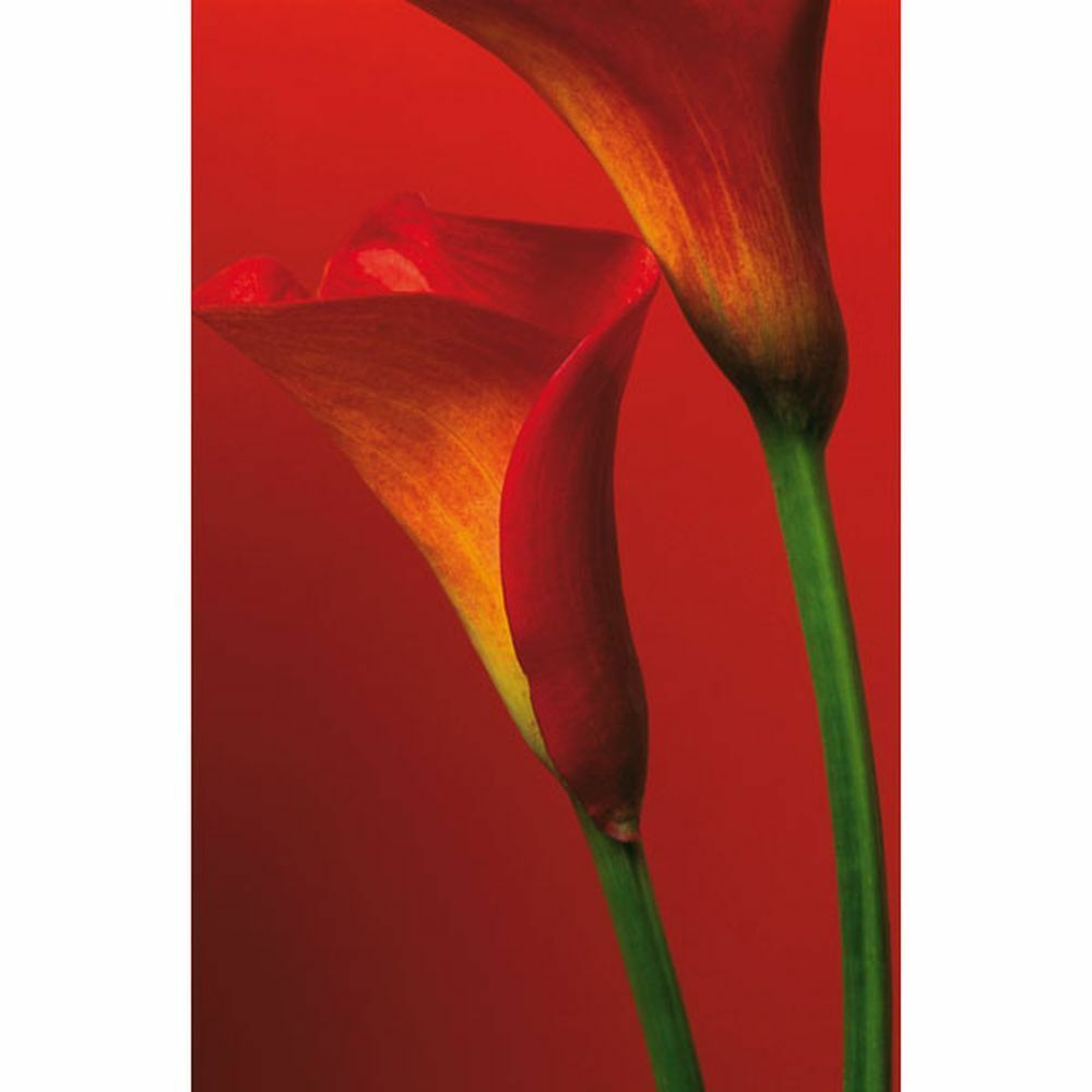 Photo Wallpaper Wall Mural - Red Calla Lilies Flowers (72x100) -
