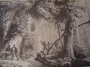 Brasil-Brazil-Woodland-Open-the-Long-of-Mucuri-Engraving-on-Steel-of-1838