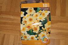 10 Blumenzwiebeln,Narzisse,Minnow,Miniatur,gelb#BZ115