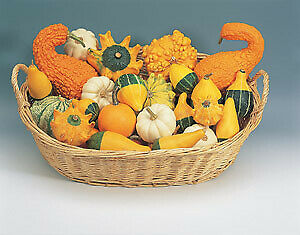 Ask Gourd Ornamental Small Fruits Mix    250 seeds  Need More