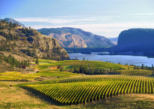 Art print POSTER Canada CANVAS  Vineyards of Okanagan Valley