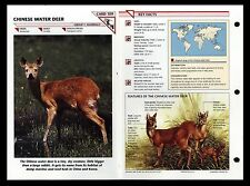"""""""CHINESE WATER DEER"""" WILD LIFE FACT FILE ANIMAL CARD/HOME SCHOOL STUDY"""