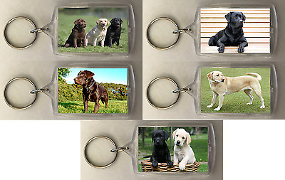 Australian Cattle Dog Keyring Dogs Puppy Puppies Keyring Gift #12478