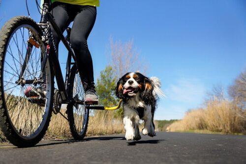 Bike Tow Leash Dog Bicycle Attachment Leash