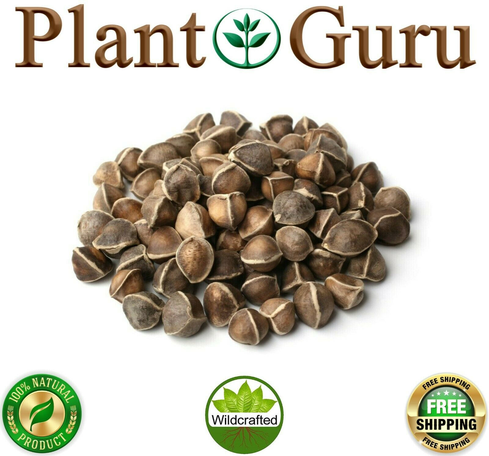 1000 Moringa Oleifera Seeds 10oz WINGLESS Fresh Organic Semillas de Moringa Tree