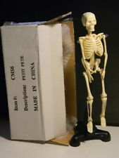 Petite Pete Skeleton Anatomy Model Withstand